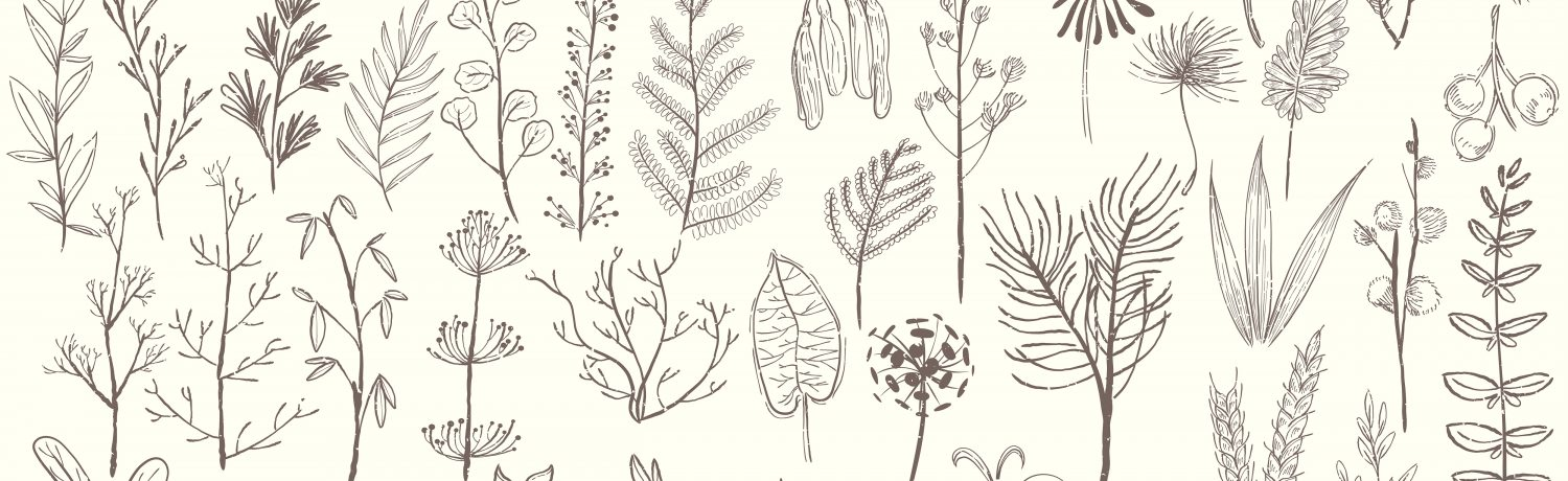 Illustration of various types of plants