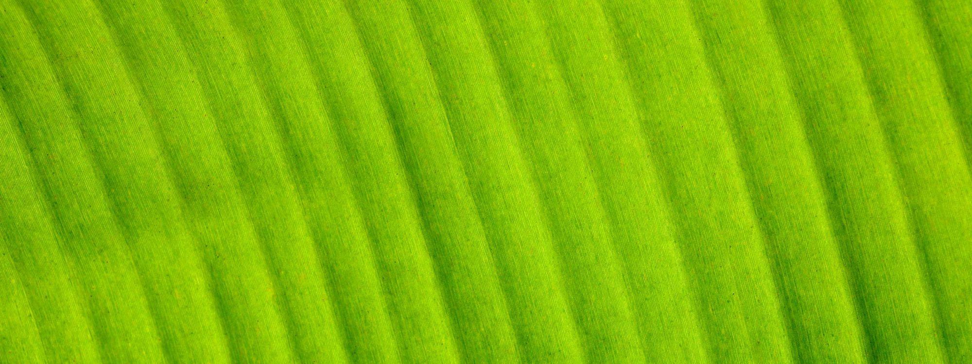 textura-vegetal-1