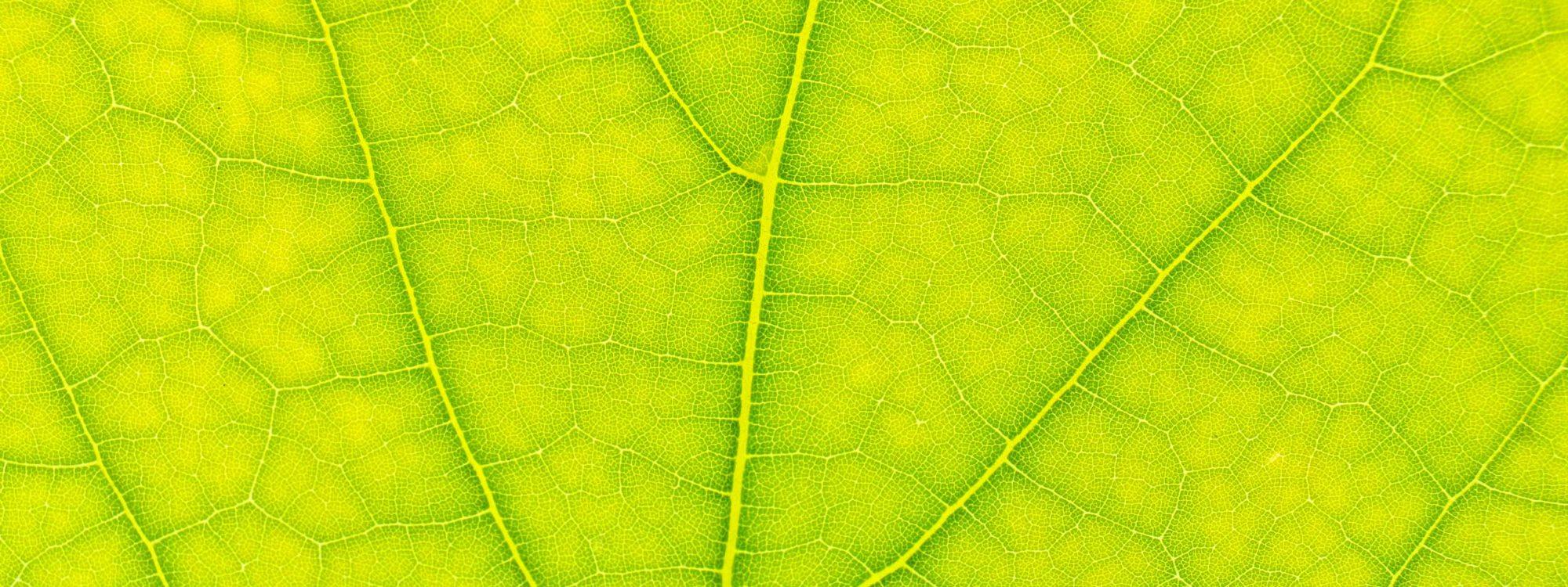 textura-vegetal-2
